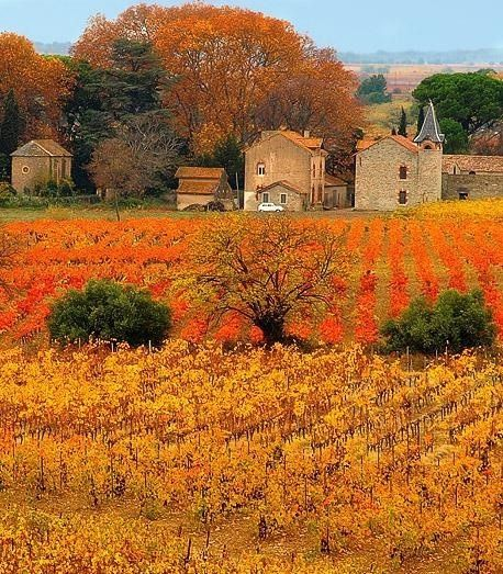 autumn vineyards france