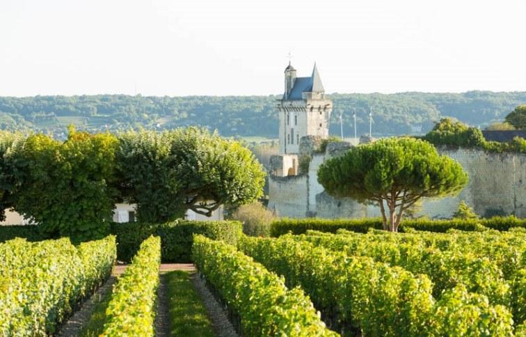vineyards-loire