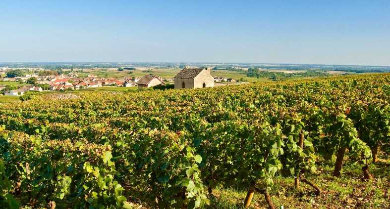 Meursault vineyards