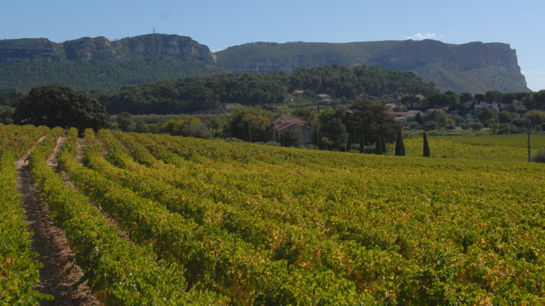 cassis vineyards