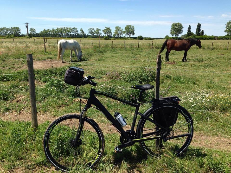 horses-bike
