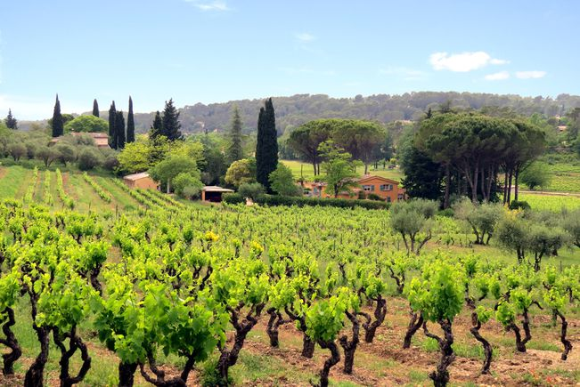 vineyards var